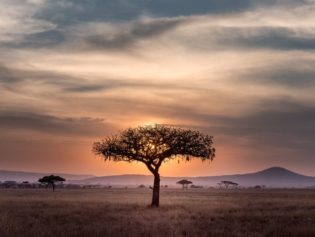 Les relations publics en Afrique du Sud